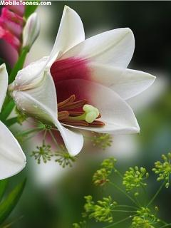 Nice Flower Mobile Wallpaper