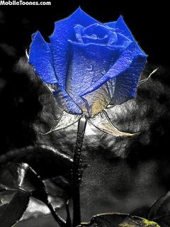 Blue Rose Mobile Wallpaper