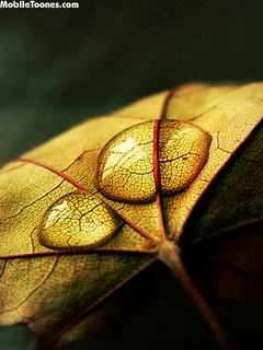Yellow Leaf Mobile Wallpaper