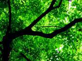 Green Trees Mobile Wallpaper