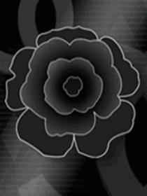 Z Black Rose Mobile Wallpaper