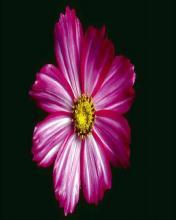 Flower 12 Mobile Wallpaper