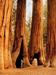 Tree  Technology Mobile Wallpaper
