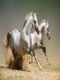 Horse softwares