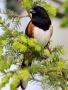 Bird Sit On Tree wallpapers