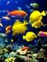 Best Fish wallpapers