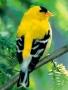 Bird - Yell wallpapers