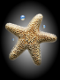 Star Fish wallpapers