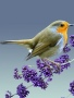 Bird wallpapers
