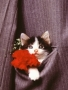 Cat With Flowerrs wallpapers