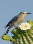 Desert Bird wallpapers