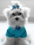 Puppy In Blue wallpapers