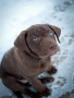 Cute Doggy wallpapers