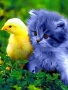 Friends Pet wallpapers