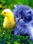 Friends Pet wallpapers