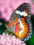 Butterfly On Pink wallpapers