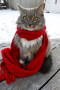 Snow Christmas Cat IPhone Wallpaper wallpapers