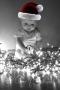 Cutie Pie In Christmas Hat wallpapers
