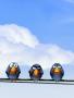 Birds-3 wallpapers