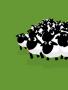 Dozen Sheep wallpapers
