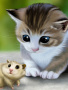 Cat And Mouse wallpapers