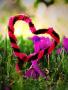Heart In Field wallpapers