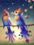 Birds Love wallpapers
