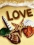 Love Sea Shells wallpapers