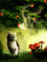 Angle Cat wallpapers