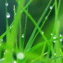 Wet Grass wallpapers