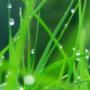 Wet Grass wallpapers