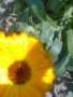 Flower11212 wallpapers