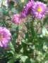 Flower1121233 wallpapers