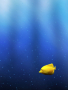 Yellow Fish wallpapers