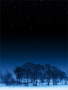 Night Trees wallpapers