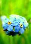 Nice Blue Flower wallpapers