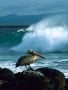 Duck Sit ON Sea Side wallpapers