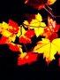 Dark Colors Flowers wallpapers