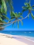 Tress At Sea Side wallpapers