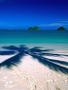 At Beach Tree Shade wallpapers