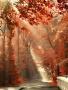 Autumnn wallpapers