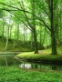 Elswout Forest wallpapers