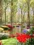 Colourful Garden wallpapers