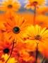 Orange Garden wallpapers