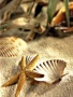 Sea Shells wallpapers