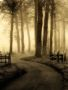 Misty Morning wallpapers