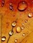 Orange Drops wallpapers