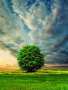 Green Tree wallpapers