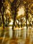 Sun Light Trees wallpapers