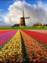Color Flowers wallpapers